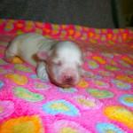 Mikkel 1 uge gammel