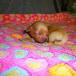 Mia 1 uge gammel