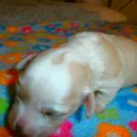 Magnus 2 uger gammel