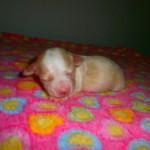 Nero 1 uge gammel