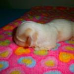 Nora 1 uge gammel
