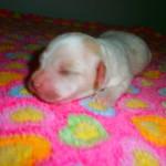 Nini 1 uge gammel