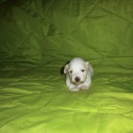 Mikkel 3 uger gammel