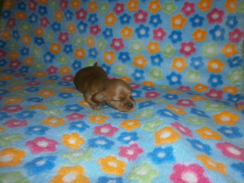 Nico 2 uger gammel