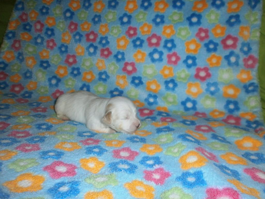 Nora 2 uger gammel