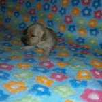 Nana 2 uger gammel