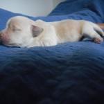 Odin 1 uge gammel