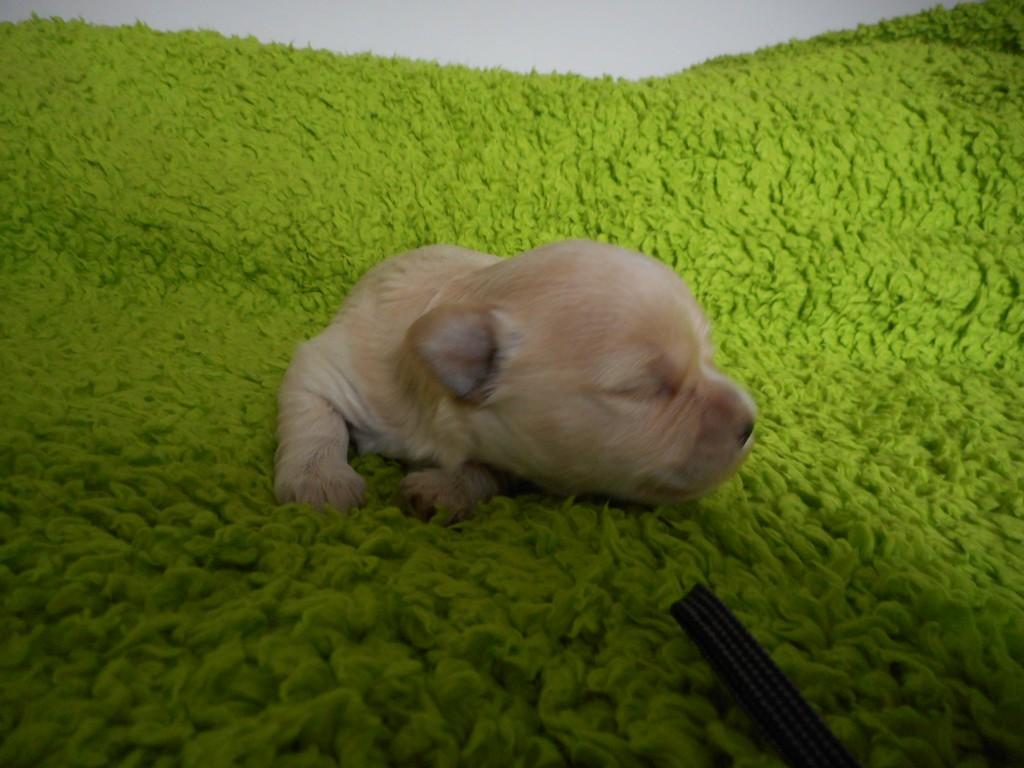 Odin 2 uger gammel