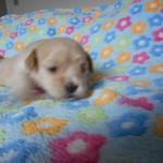 Odin 3 uger gammel