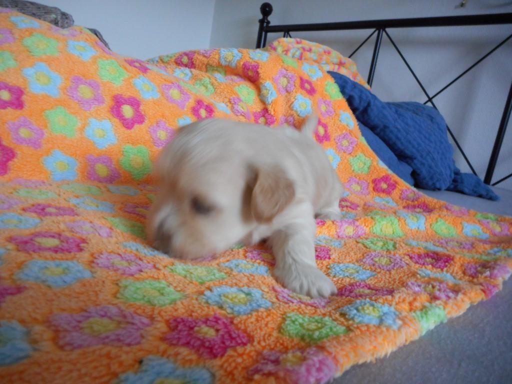 Odin 4 uger gammel