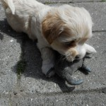 Odin 6 uger gammel