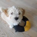 Odin 7 uger gammel