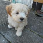 Odin 8 uger gammel