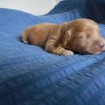Oliver 1 uge gammel