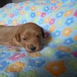 Oliver 3 uger gammel