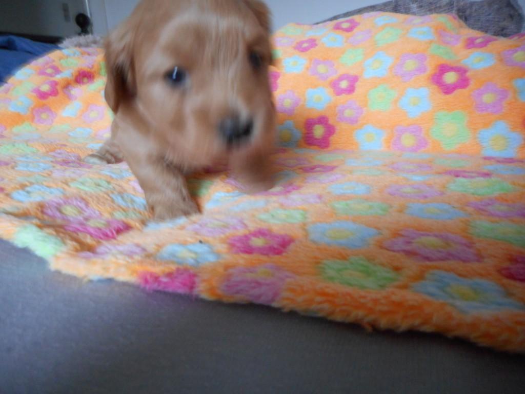 Oliver 4 uger gammel