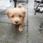 Oliver 5 uger gammel