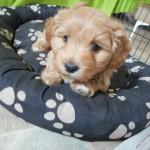Oliver 6 uger gammel