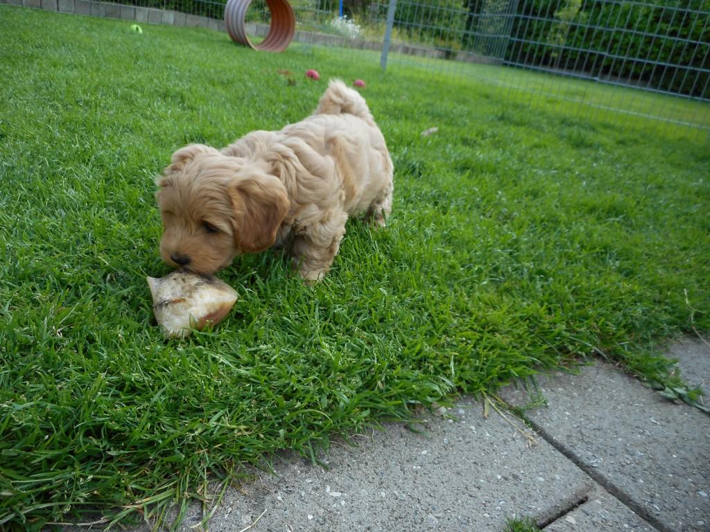 Oliver 7 uger gammel