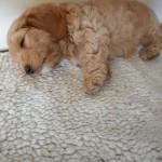 Oliver 8 uger gammel