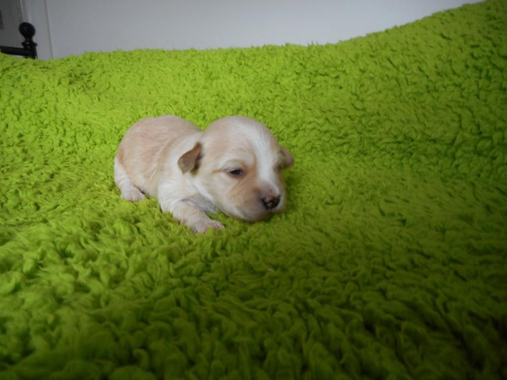 Ollie 2 uger gammel