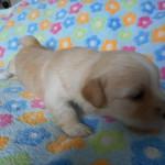 Ollie 3 uger gammel