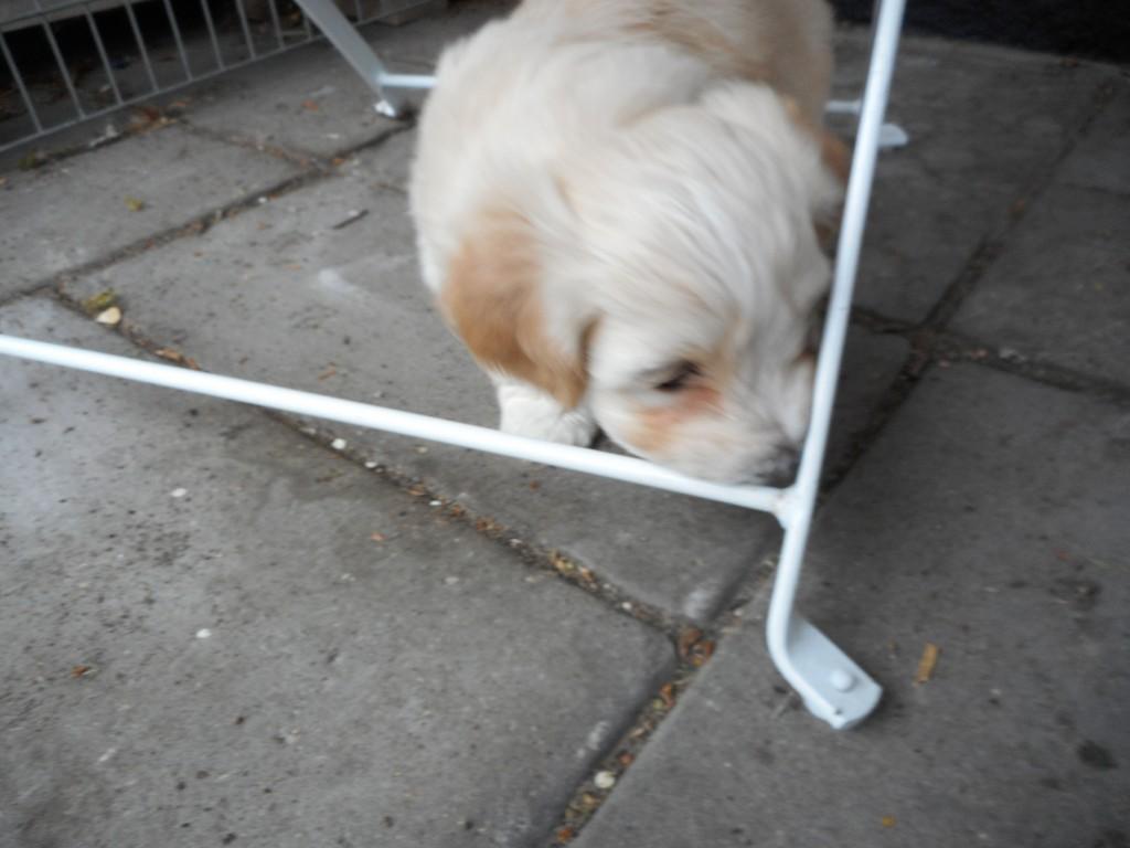 Ollie 5 uger gammel