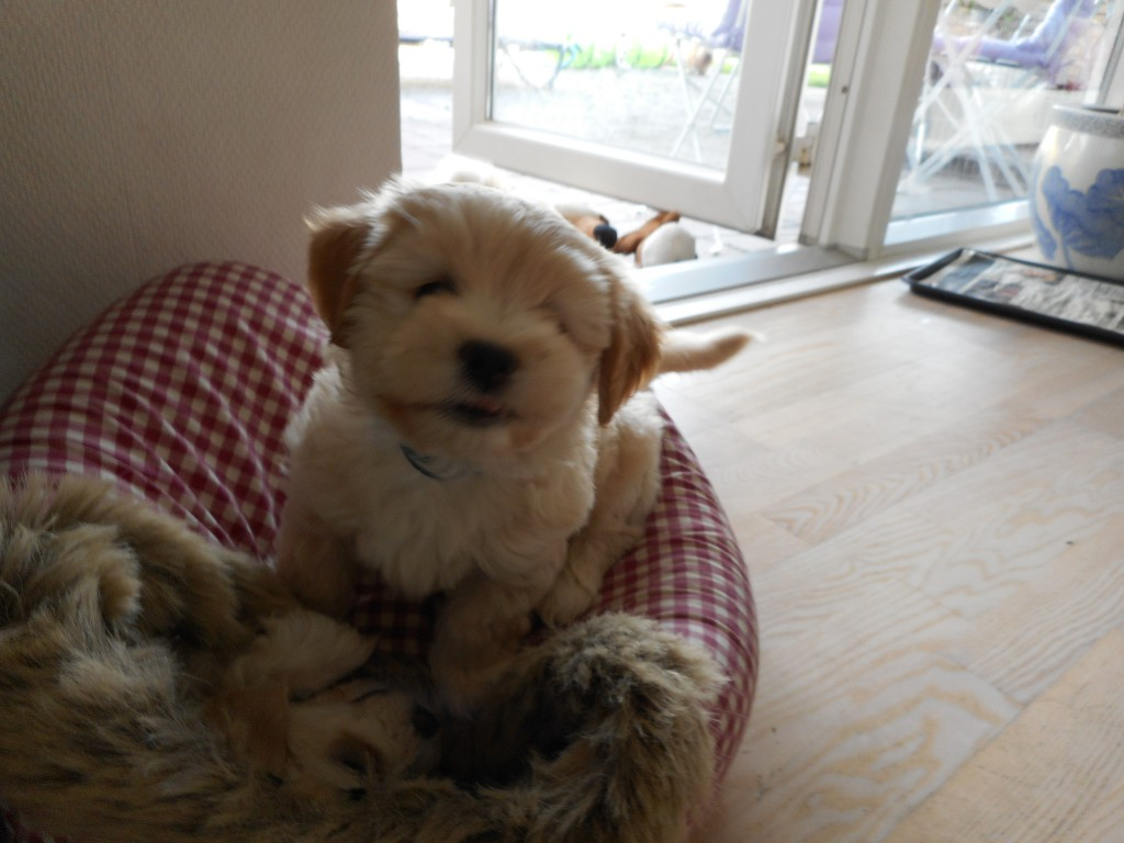 Ollie 7 uger gammel