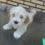 Ollie 8 uger gammel