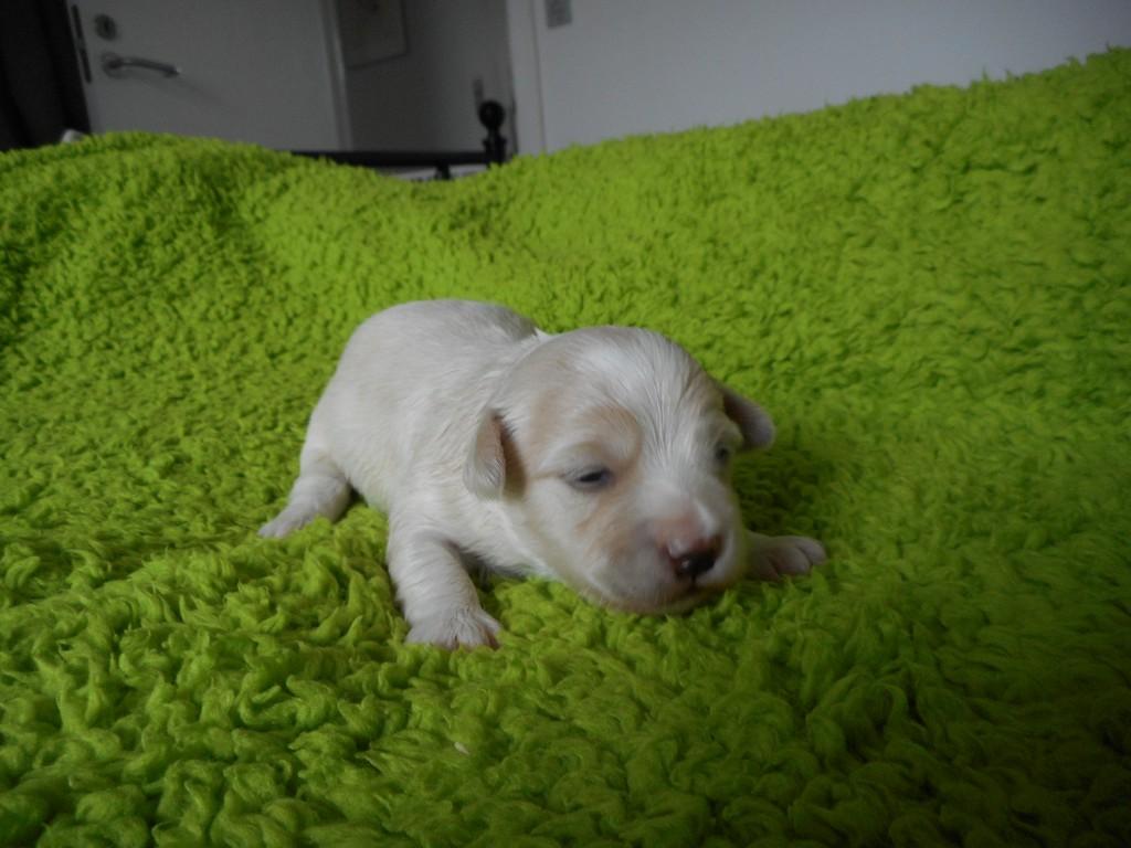 Oscar 2 uger gammel