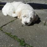Oscar 8 uger gammel