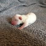 Otto 1 dag gammel