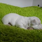 Otto 2 uger gammel