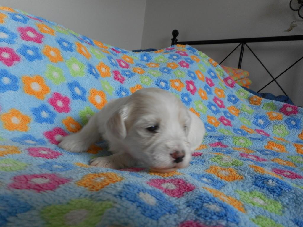 Otto 3 uger gammel