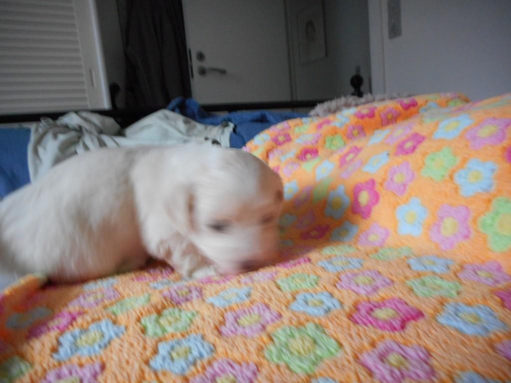 Otto 4 uger gammel