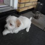 Otto 5 uger gammel