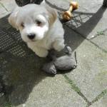 Otto 6 uger gammel