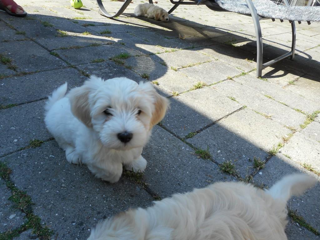 Otto 8 uger gammel