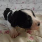 Pedro 2 uger gammel