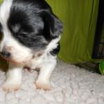 Pedro 3 uger gammel