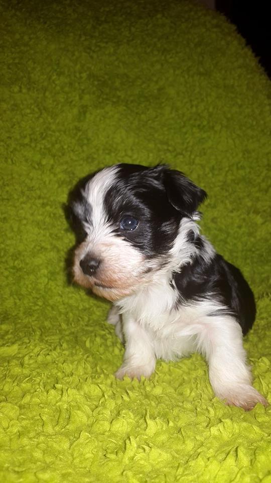 Pedro 4 uger gammel