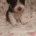 Pedro 5 uger gammel
