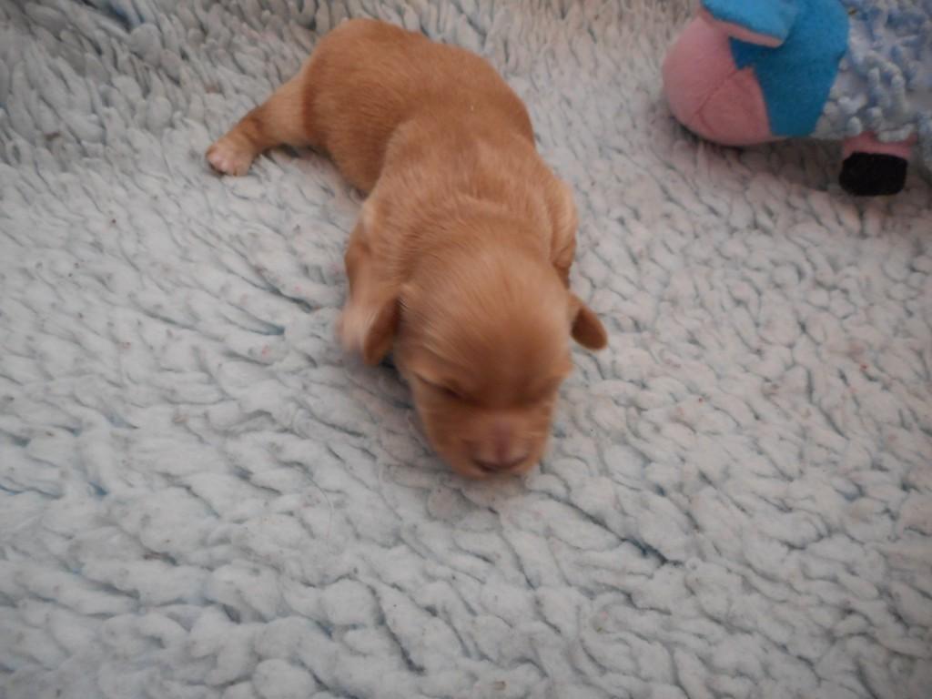 Quatio 1 uge gammel