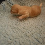 Quinnie 1 uge gammel