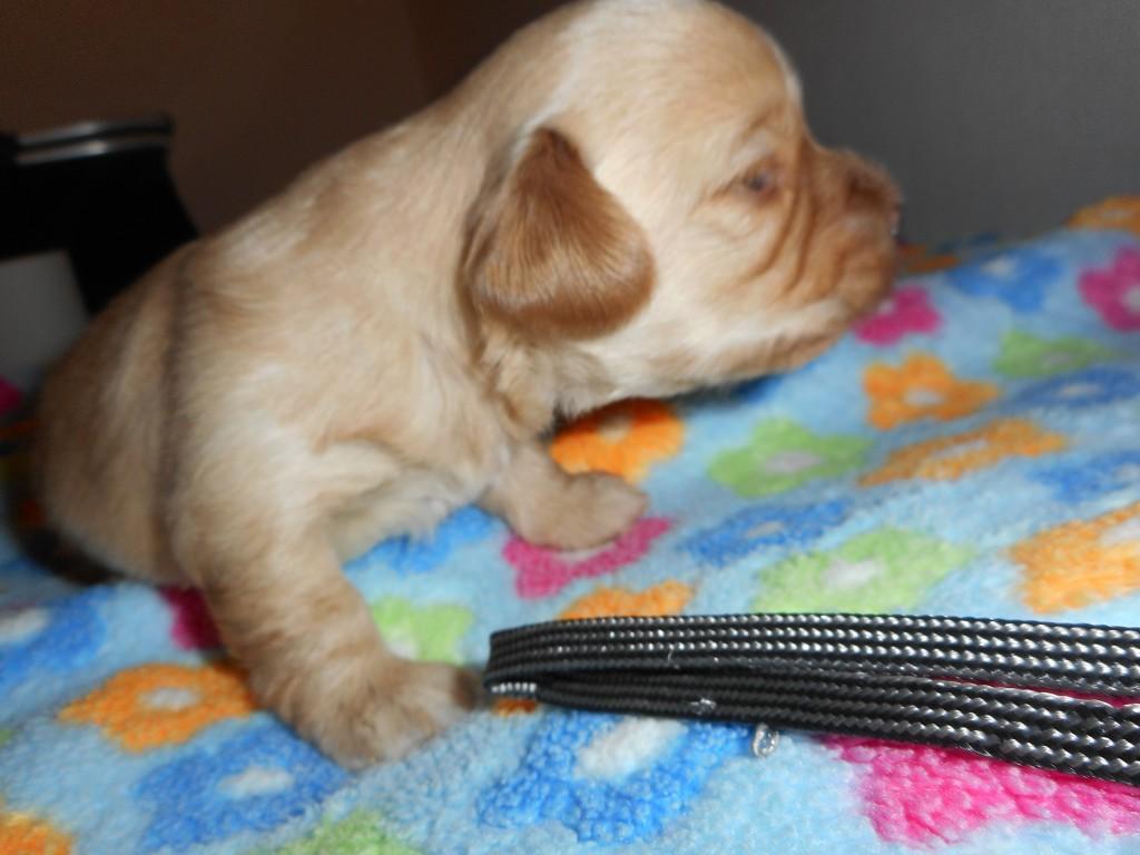 Quinnie 2 uger gammel