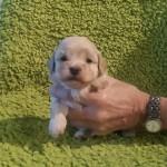 Quinnie 3 uger gammel