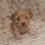 Quinnie 4 uger gammel